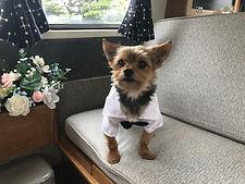 pageboy dog wedding car welling