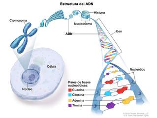 Ocho de cada 10 personas con genes de riesgo para el cáncer no lo saben