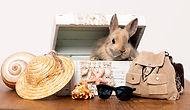 Pension lapins nains et cochons d'Inde