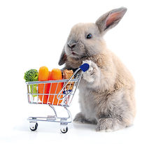 Cute bunny shopping for his favorite sna