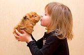 Adoption lapins nains et cochons d'Inde