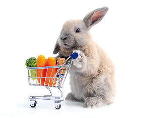 Cute%20bunny%20shopping%20for%20his%20fa