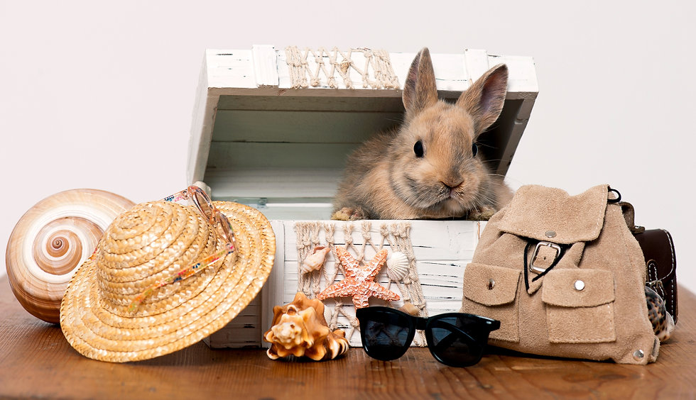 little-rabbit-in-a-box-with-beach-holida