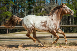 horses-196