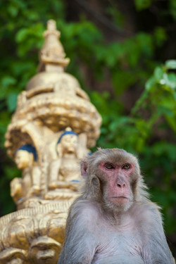 monkeytemple-72
