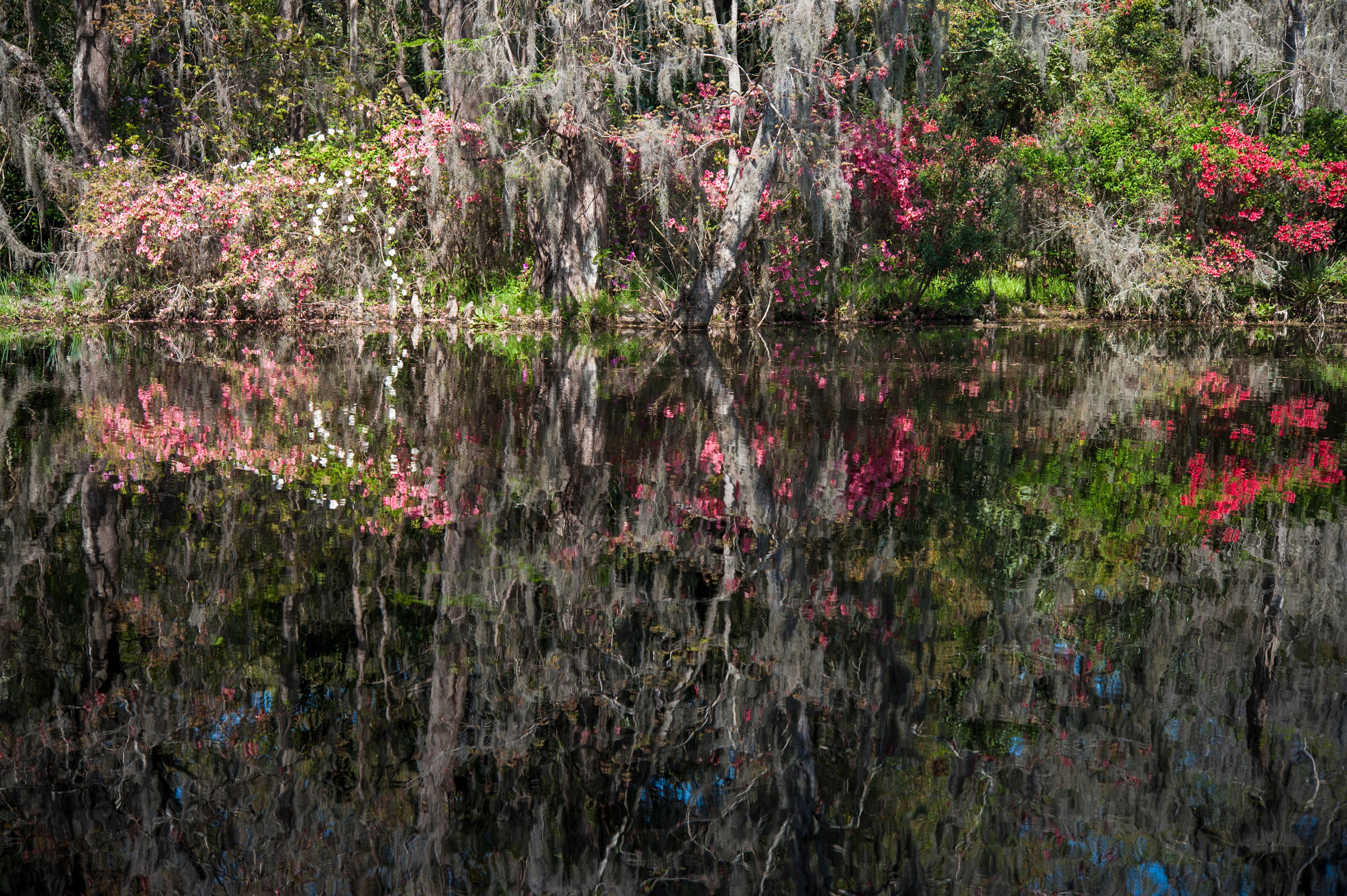 magnolia2-310