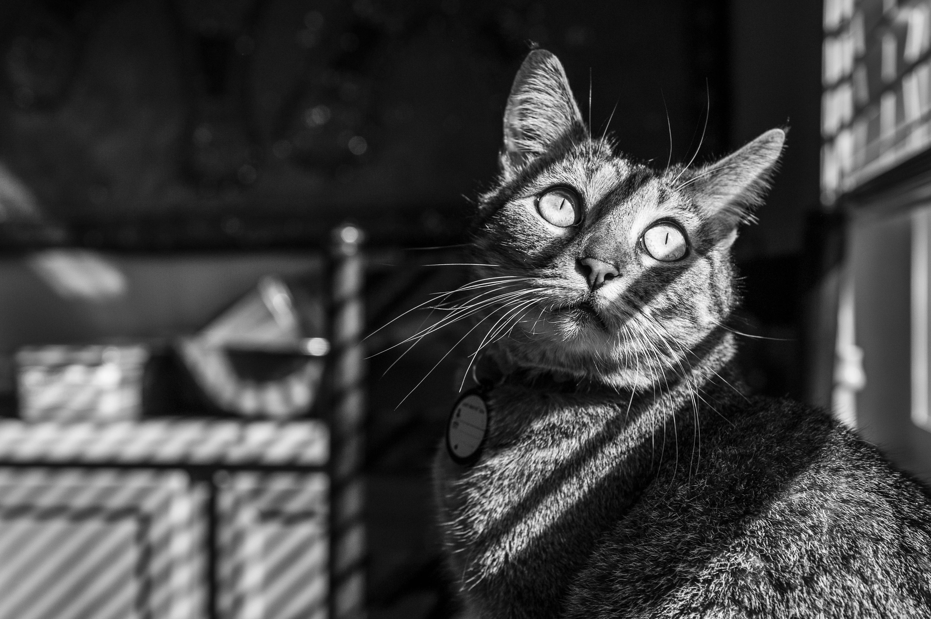 catsmarch21-146
