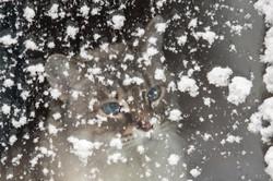 blizzard2016-109