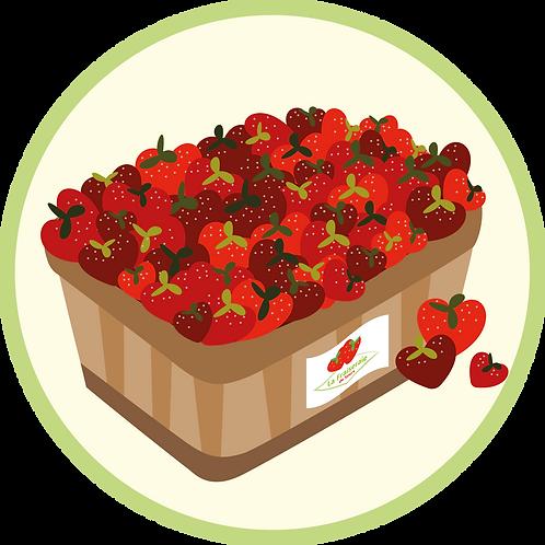 Barquette de fraises de 500 grammes