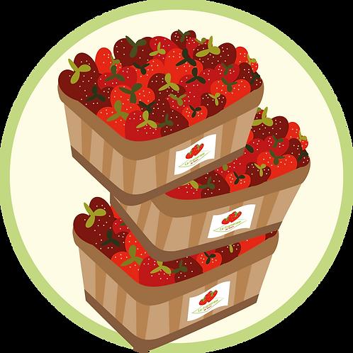 Plateau de 5kg de fraises