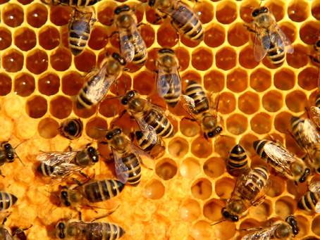 Developer Joins Consultancy Hive
