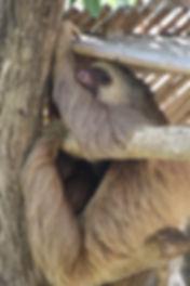 Sloth smiling.jpg