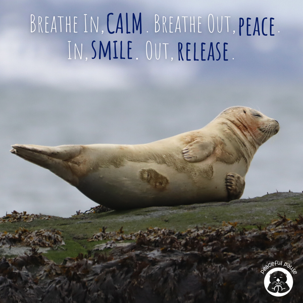 In Calm, Out Peace, In Smile, Out Releas