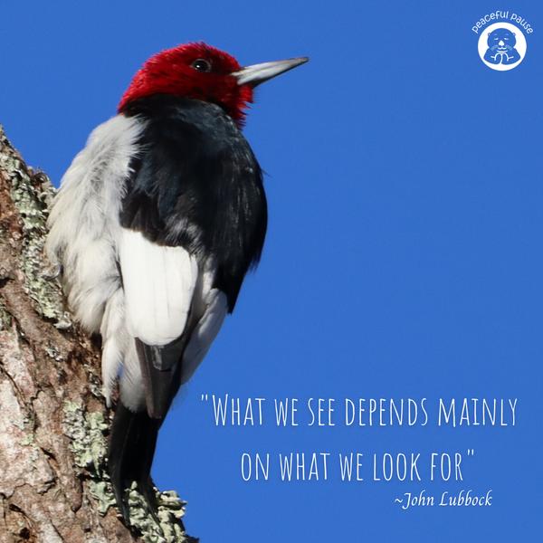 red headed woodpecker meme.png