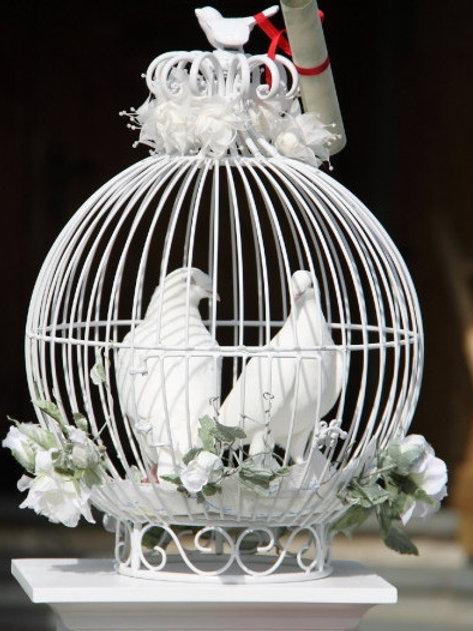 Witte Bruidsduiven