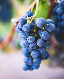 selective%20focus%20photography%20of%20purple%20grape%20fruit_edited.jpg