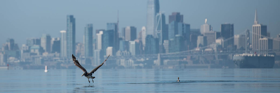 Panoramic Passion - Paddleboarding on the Bay