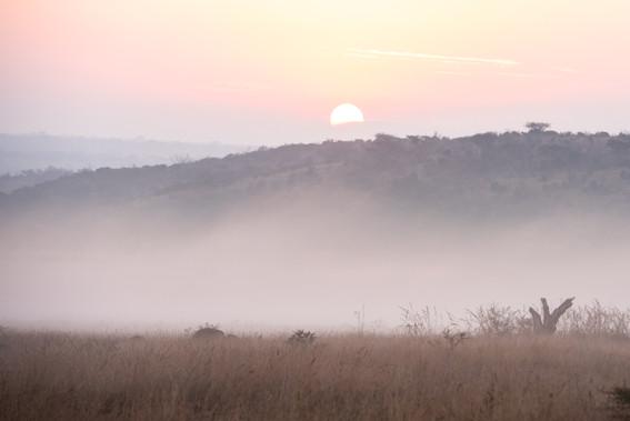 Nambiti Safari Sunrise Tracey Medcalfe Photography