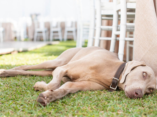 Wedding Exhaustion Tracey Medcalfe Photography