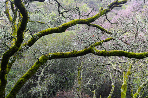 Spring Moss Tracey Medcalfe Photography