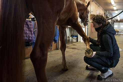 Horse foreleg stretch