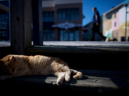 Everyday ethics: Is it OK to feed stray cats during the coronavirus crisis?