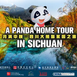 """2021天涯共此时——""""月满中秋""""中国地方特色文化之旅微纪录片《四川大熊猫家园之旅》"""