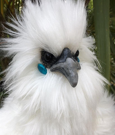 Prudence the Silkie