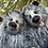 Thumbnail: Delilah Mae Hicklebough and her cub Beau Blue Hicklebough
