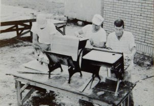1954-Refinishing-School-Desks-300x207.jp