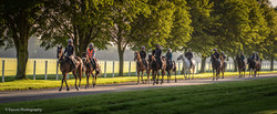 Returning from the Summer Gallops