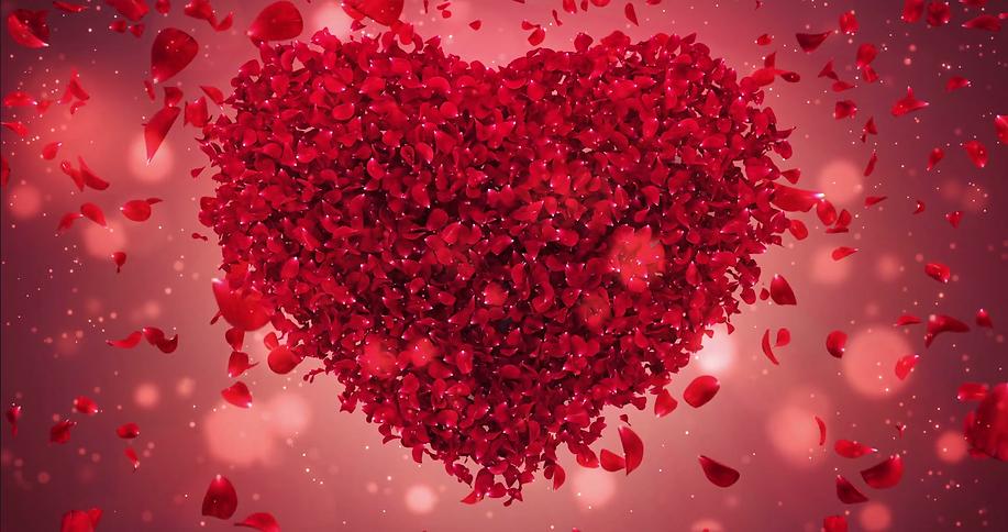 red-rose-flower-falling-petals-in-lovely