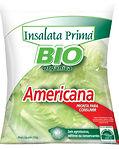 IP americana BIO.jpg