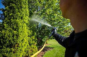 technician-spraying-shrubs-tree-plant-he