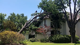 Professional-Storm-Cleanup-Services.jpg