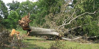 fallen-tree.jpg