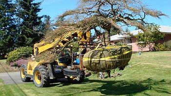 adequate-tools-perform-tree-removal.jpg