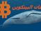 """لماذا يستطيع """"الحيتان"""" أن يحددوا سعر البتكوين!"""