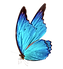 Butterfly_side.png