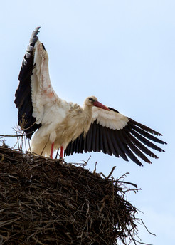 2019RFNHM_PDI_022 - Leaving the nest by Raymon Hughes.