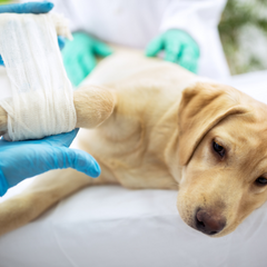 Baton Rouge Pet Orthopedic.png