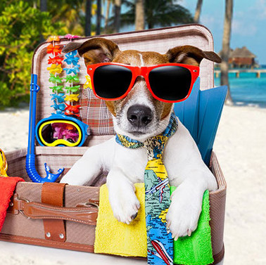 Baton Rouge Pet Borading.jpg