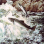 Goodbye to a Friend of Atlantic Salmon & Conservation