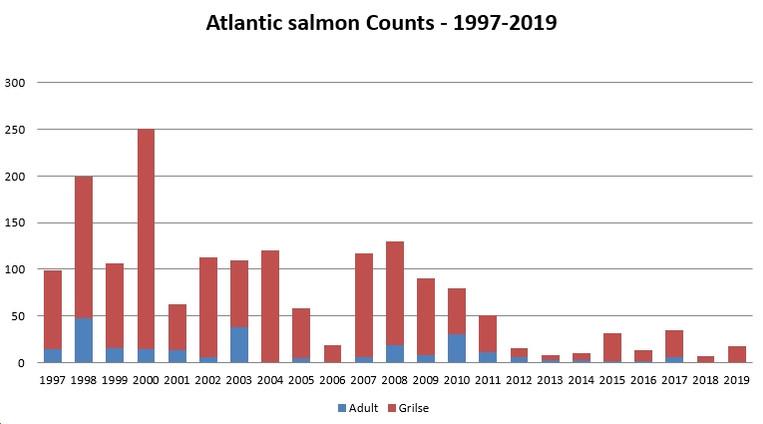 Atlantic Salmon Counts