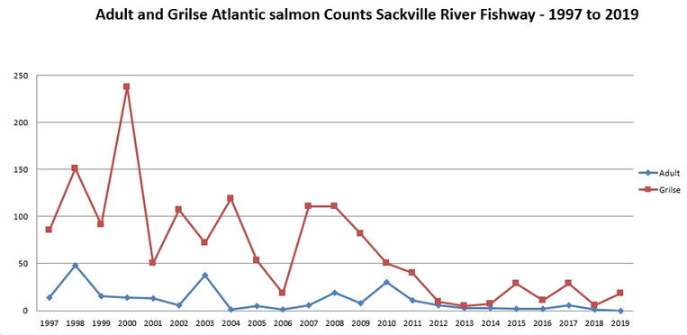 Salmon and Grilse Counts