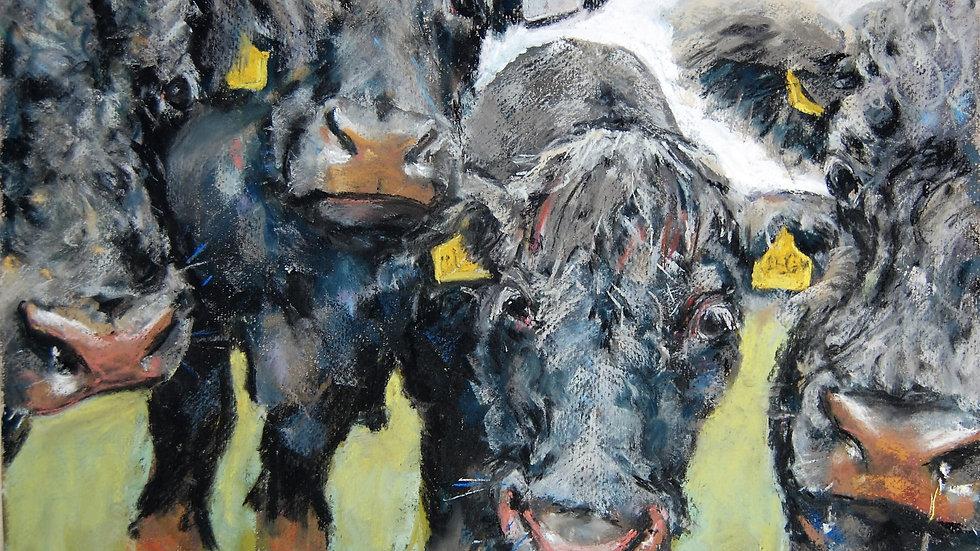 Cossington Bullocks