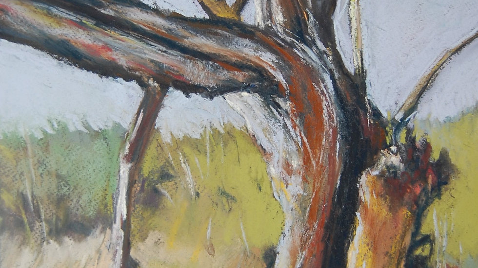Weathered Willow 4