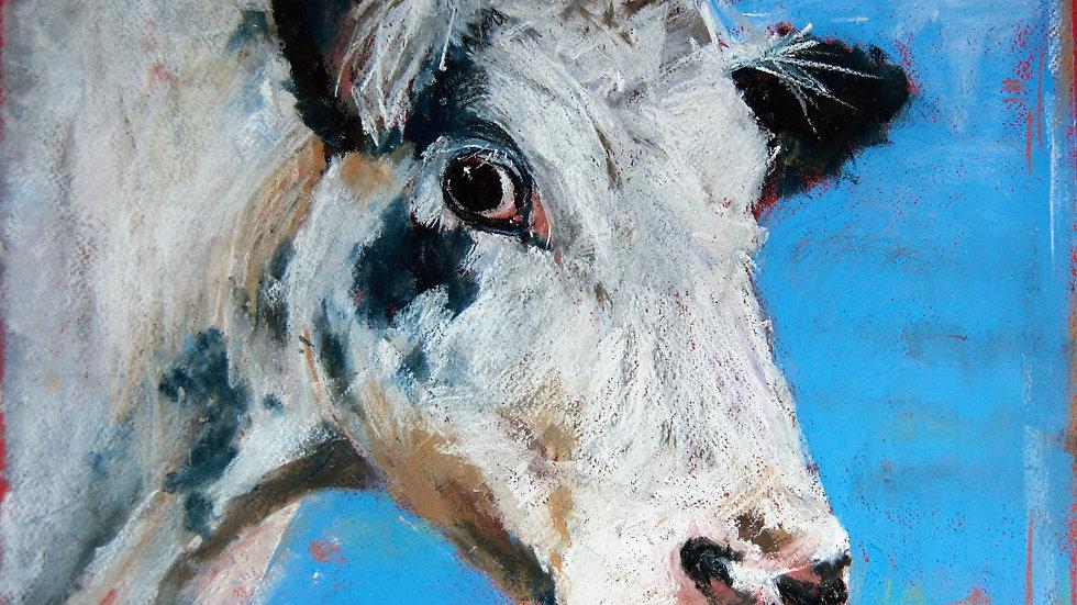 Dalby Heifer 1