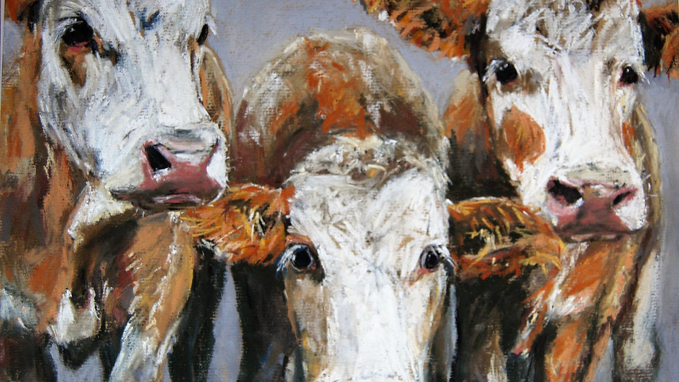 Three Young Bullocks