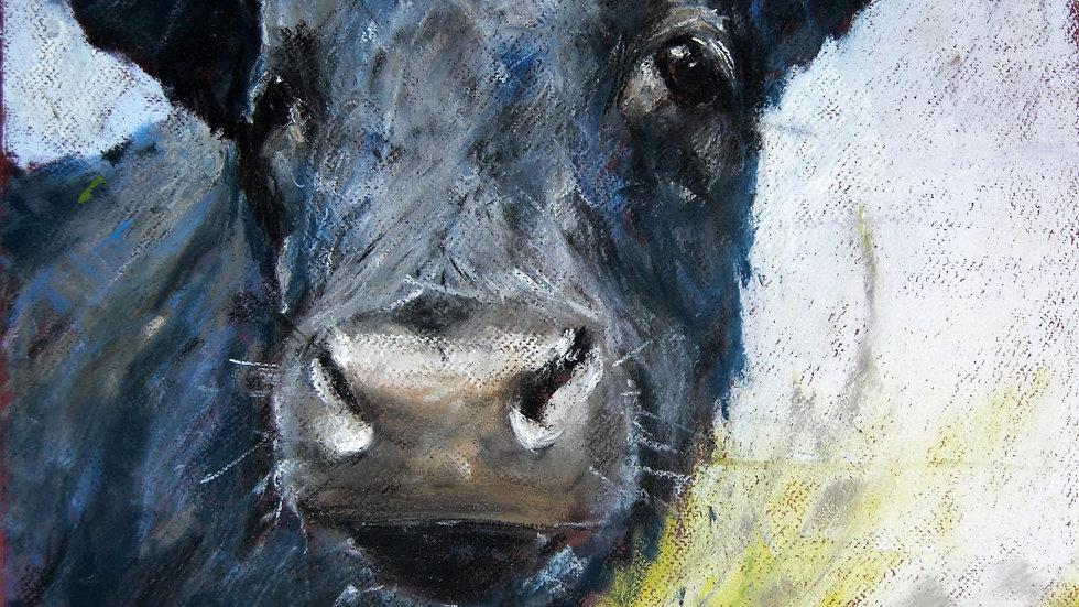 Black Bull Calf